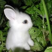 bunnyboy fotka