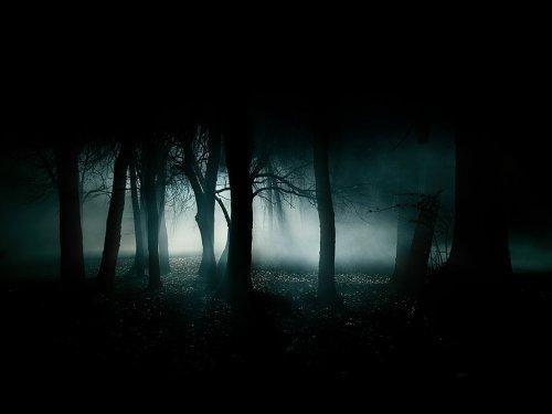 Výsledek obrázku pro temný les
