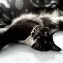 Faust vegetí na posteli