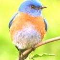 :bird: