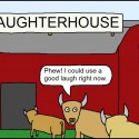 nikdy neverte muzom, kravy!