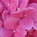 Kvety..tiež môže...aj ked študujem odbor v ktorom sa zaujímam o kvetiny...veľmi ma nebaví...:P