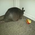 pasavec prokop sa siel hanbit do kuta bo mi zozral jablko