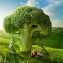 brokolicovy strom