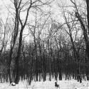 lesík, pesík, snežík... hashtag prznimslovaakovegan