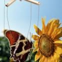 kartonovy motylcek