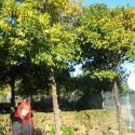 tangerina a male tangerincata:D pomarance aj mandarinky tam rastu aj po uliciach, v pohode aj v decembrovych mrazoch