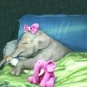 slonie babatko