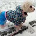Zima, sneh a Kira :D
