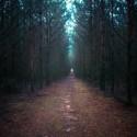 záhorské lesy , fotené včera, super atmosféra