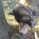 vlcik sa nechcel fotiť :D