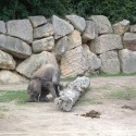 slon ma 4 nohy a predsa sa potkne