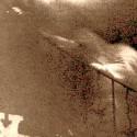 bytost snaziaca sa sa vysplhat po zabradli na nahodnej fotke schodiska. v tamojsom kastieli vraj aj casto pozorovali inu postavu, ktora sa zurivo snazila vydrhnut krvavu podlahu