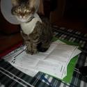 mačička!!! :) a sedí mi na ruštine! :D strašne sa jej na nej lúbi...alebo na mape a tak :D