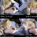 Story of my cat.