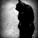 Ešte melancholický záber na mačku