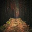 vojenské lesy Záhorie