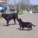 A vraj že psy sa nevedia venčiť sami :D :D
