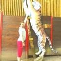 tiger oproti cloveku
