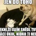 Pes nie je kamarád,pes je jedlo.