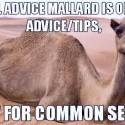 common sense camel - novy mem na scene