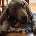 Najlepší a najkrajší pes :) Oli :*