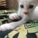 jedna moja sesternica je mmntálne v Indii a takéto krásne koťátko tam odfotili ^_^ musela som sa oň s vami podeliť, lebo je úplne najroztomilejšie ^_^